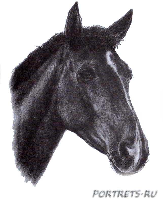 картинка головы коня кто помоложе